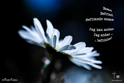 Photo & Poetry