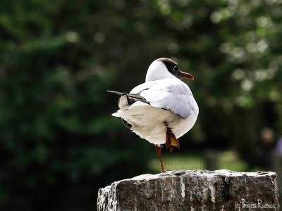 bird_20150713_spark