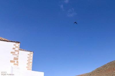 Fuerteventura - Sky Bird