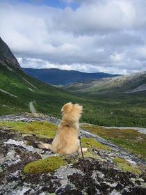 Daisy - Tibetan Spaniel - Norway