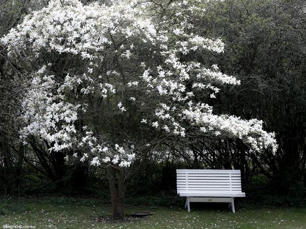 Magnolia Bench