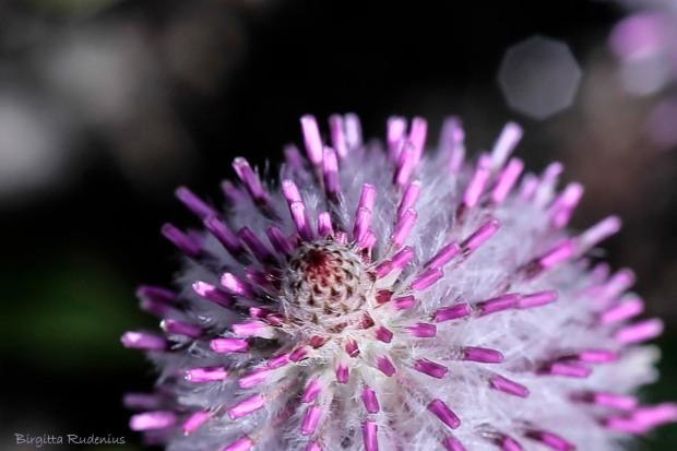MACRO - Flower Pink