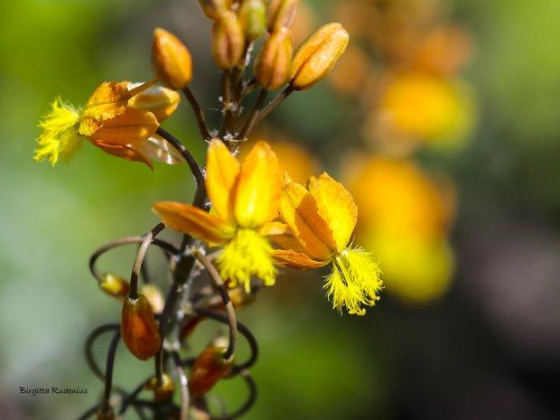 MACRO - Flowering Fire