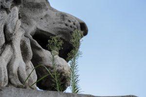 Lion at Chain Bridge, Budapest