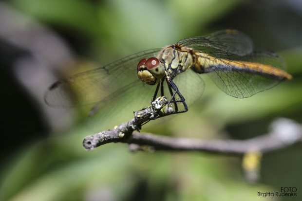 dragonfly_20160813_2
