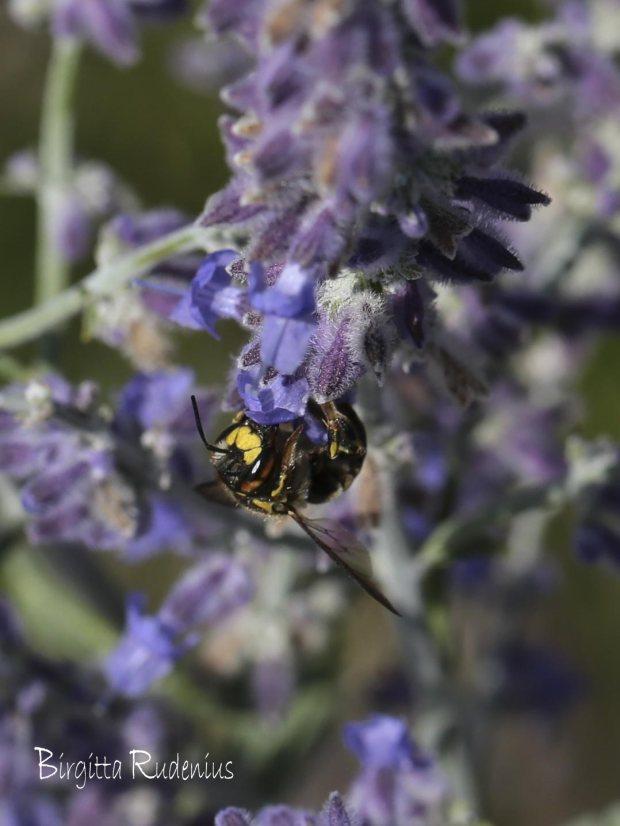 Close up - MACRO Wasp