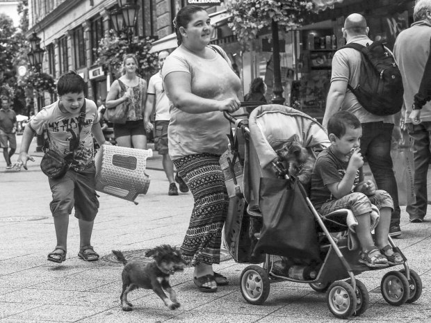 Street Photography - Jeopardizing puppies