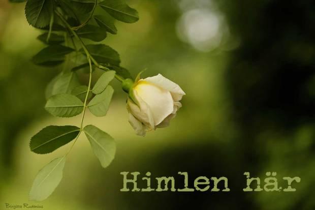 Himlen här - Birgitta Rudenius