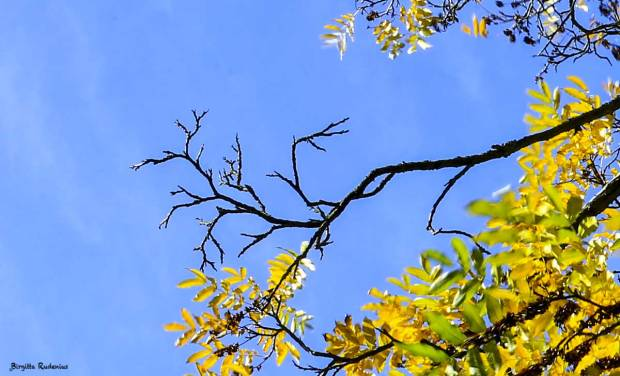 Blue sky & Yellow leaves