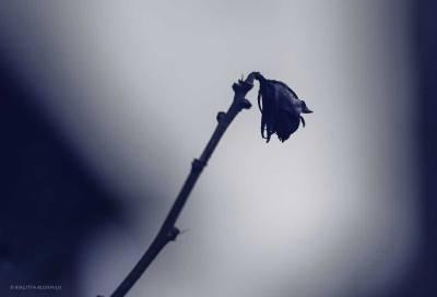 Blue Photo - Minor Key