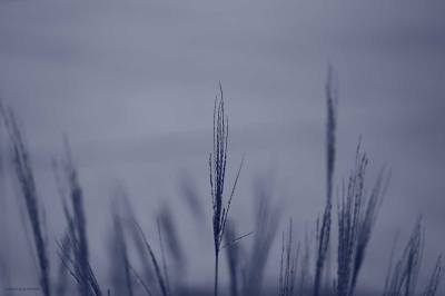 Blue Photo - Grass