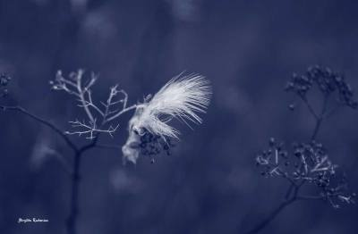 Blue Photo - Feather Rest