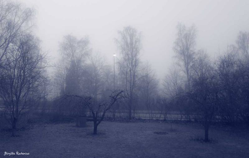 Blue Photo - Misty Weather