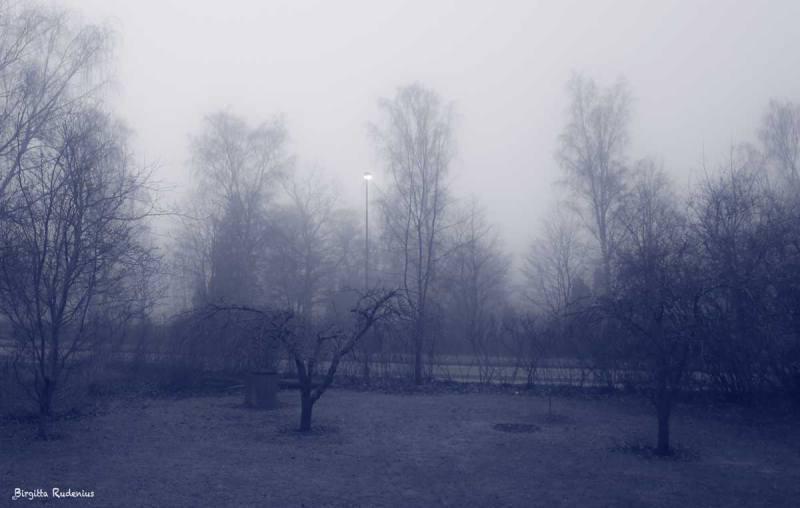 Blue Photo - Misty Weather