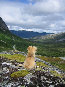 Daisy - The Tibetan - Highlands of Norway