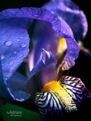 Flower Sensule