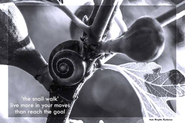 The Snail Walk Poetry - 21st March 2017.