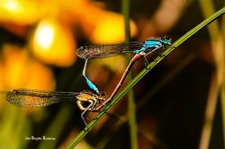 dragonfly_20140701_wheel