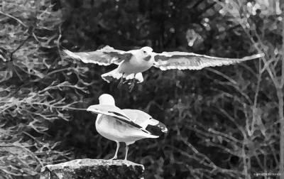 PhotoMania - Seagulls.