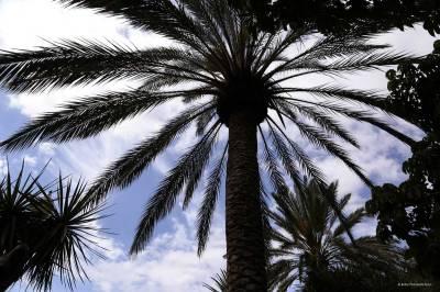 Fuerteventura Palms.