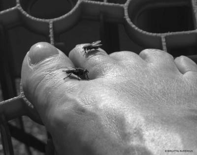 Fly Pedicure.
