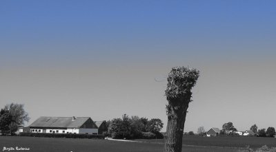 BW Blue - Pileträd i Skåne.
