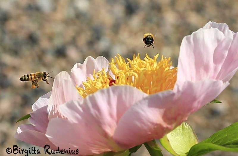 Bee festival in Flower.