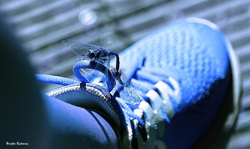 Dragonfly Wheel - Blue.