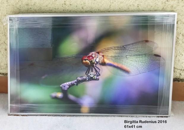 Birgitta Rudenius - Macro Dragonfly.