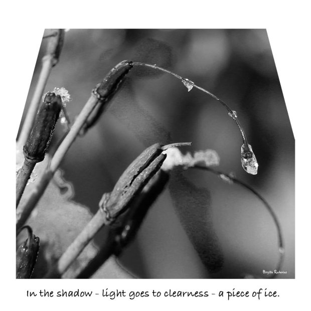 Haiku - In the shadow - light goes to clearness - a piece of ice.