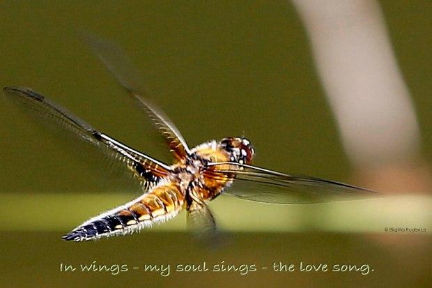 Soul sings © Birgitta Rudenius