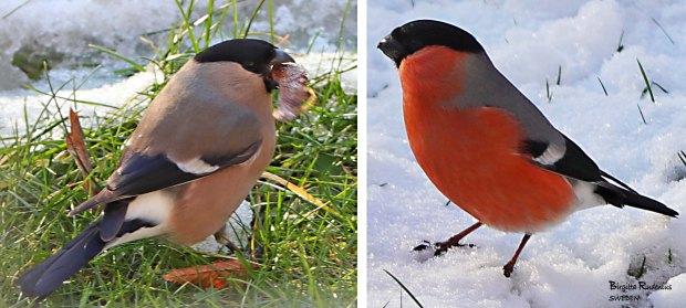 Birds Photo © Birgitta Rudenius