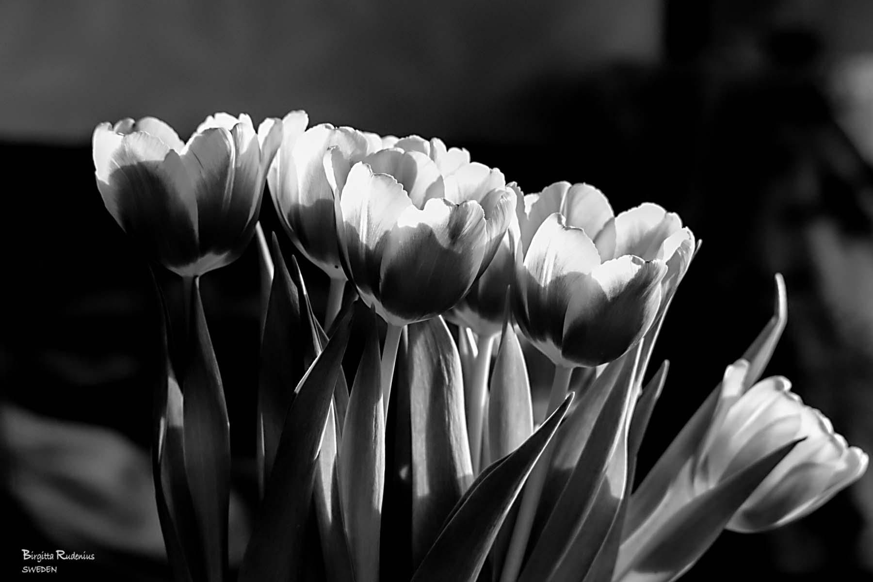 Black & White Flowers © Birgitta Rudenius