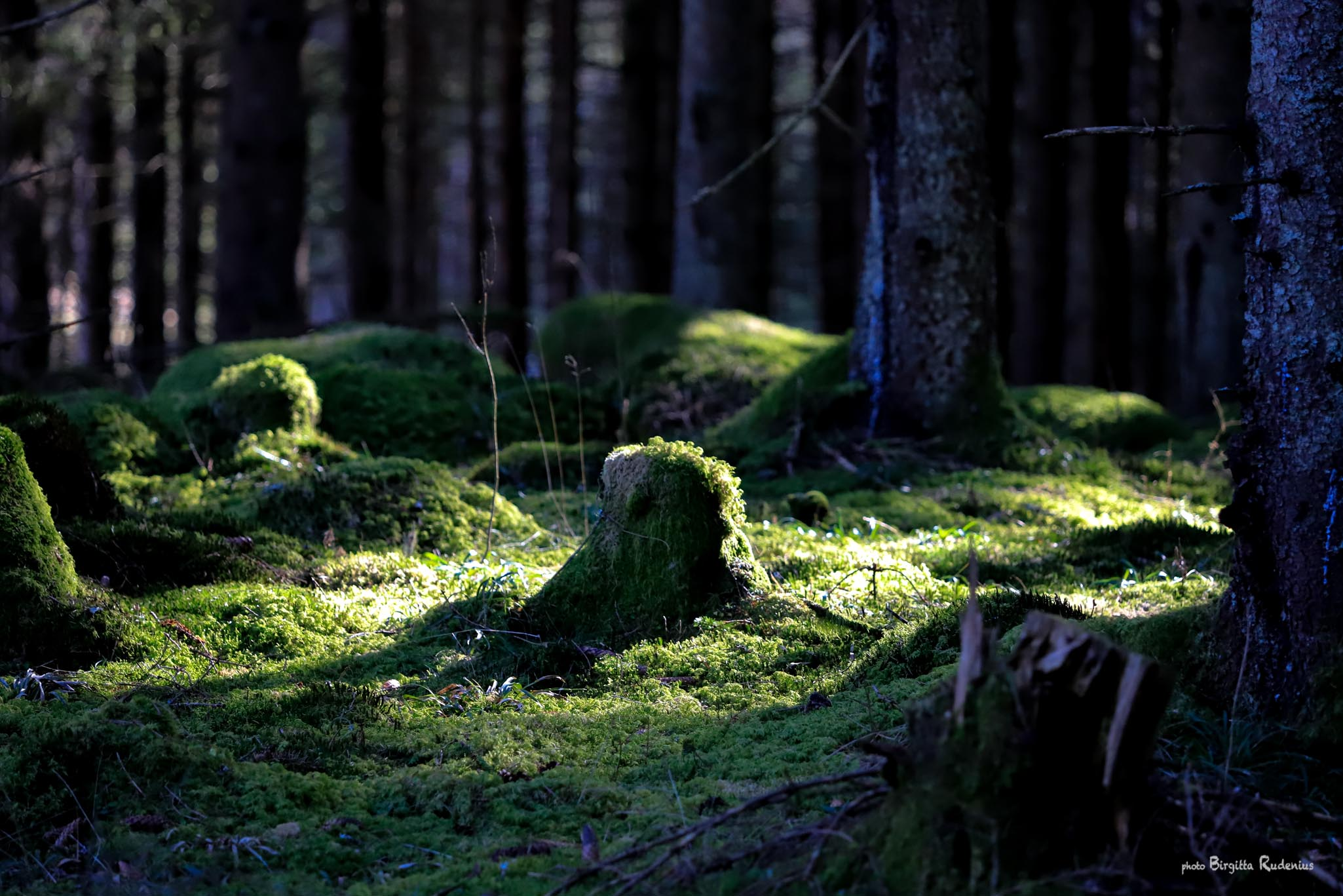 Photo © Birgitta Rudenius