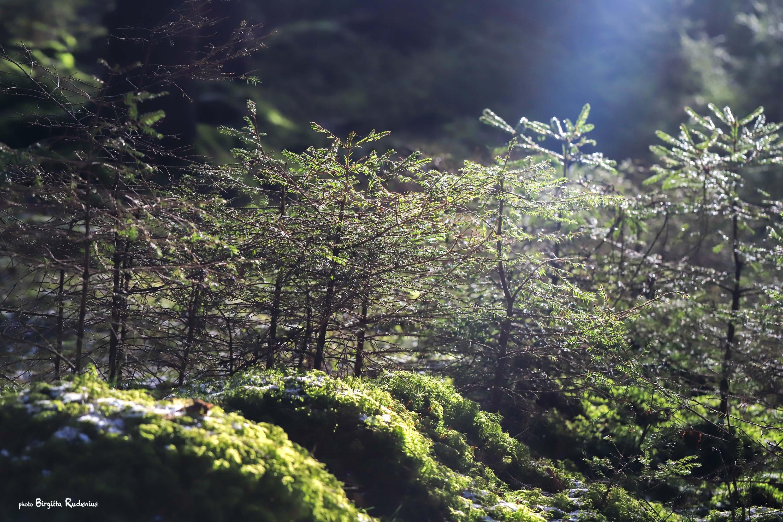 Nature Photo © Birgitta Rudenius