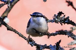 Photo Birds © Birgitta Rudenius