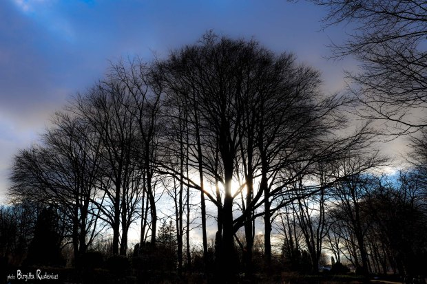 Tree Photo © Birgitta Rudenius